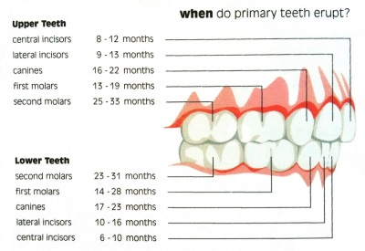 Teeth Erupting Schedule